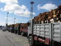 14 camioane cu lemne, capturate
