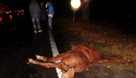 Un cal a omorat un om….pe autostrada