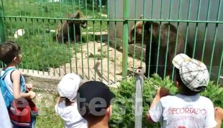(VIDEO) AGLOMERAȚIE LA ZOO TRIVALE