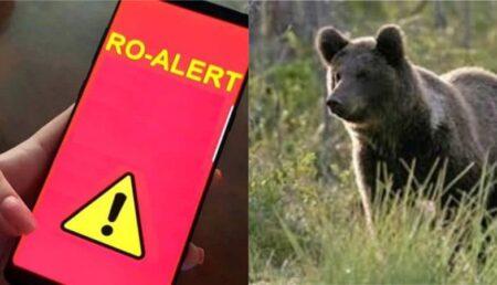 Locuitori din Corbeni vor protesta la București împotriva urșilor