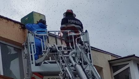 Video: Roi de albine deasupra la Taxe și Impozite în Pitești