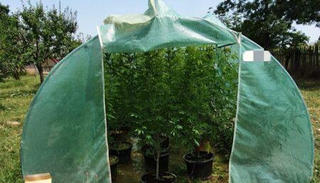 Video – Droguri la solar! Plantație de cannabis descoperită de polițiști în Argeș