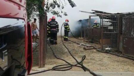 Video – Adăpost de animale în flăcări!