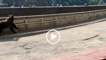 Video: Un urs se îndreaptă în viteză către un grup de oameni, la Vidraru