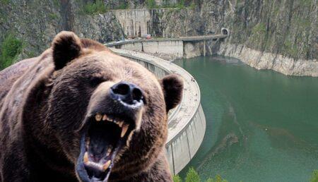 """Argeşenii, între Starea de Alertă şi RO-ALERT """"prezență urs"""""""