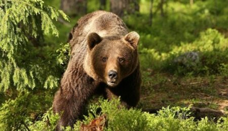 Ultima oră: Se anunţă un protest de amploare în Argeş, din cauza urşilor