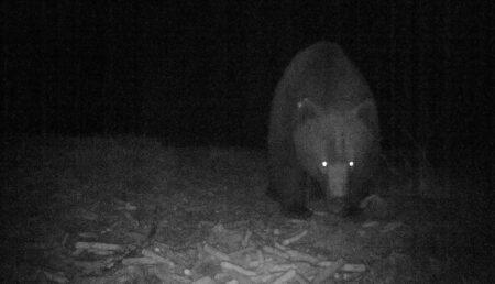 Urşii au pus stăpânire pe judeţ. Autorităţile din Argeş, paralizate