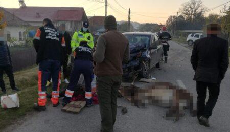 Argeş: Un măgăruş înhămat la căruţă a murit într-un accident de circulaţie